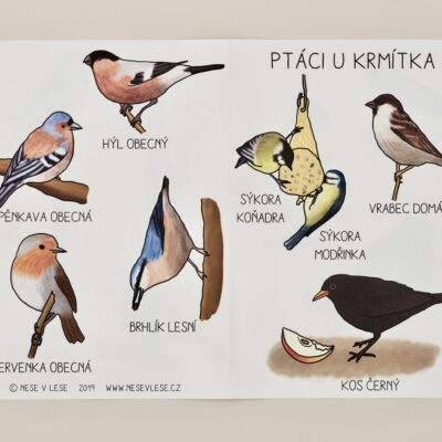 Ptáci u krmítka – obrázková karta