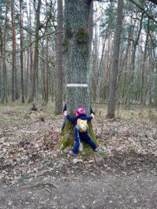 Zahraj si 5 stromových hříček