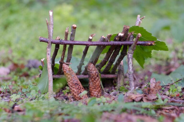Postav domeček v lese