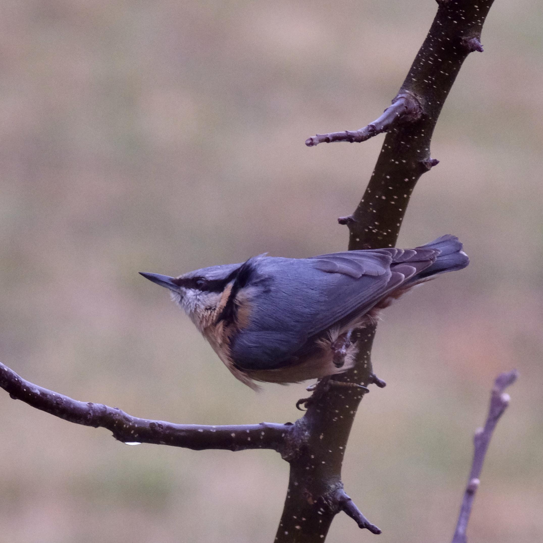 Pozoruj ptáky