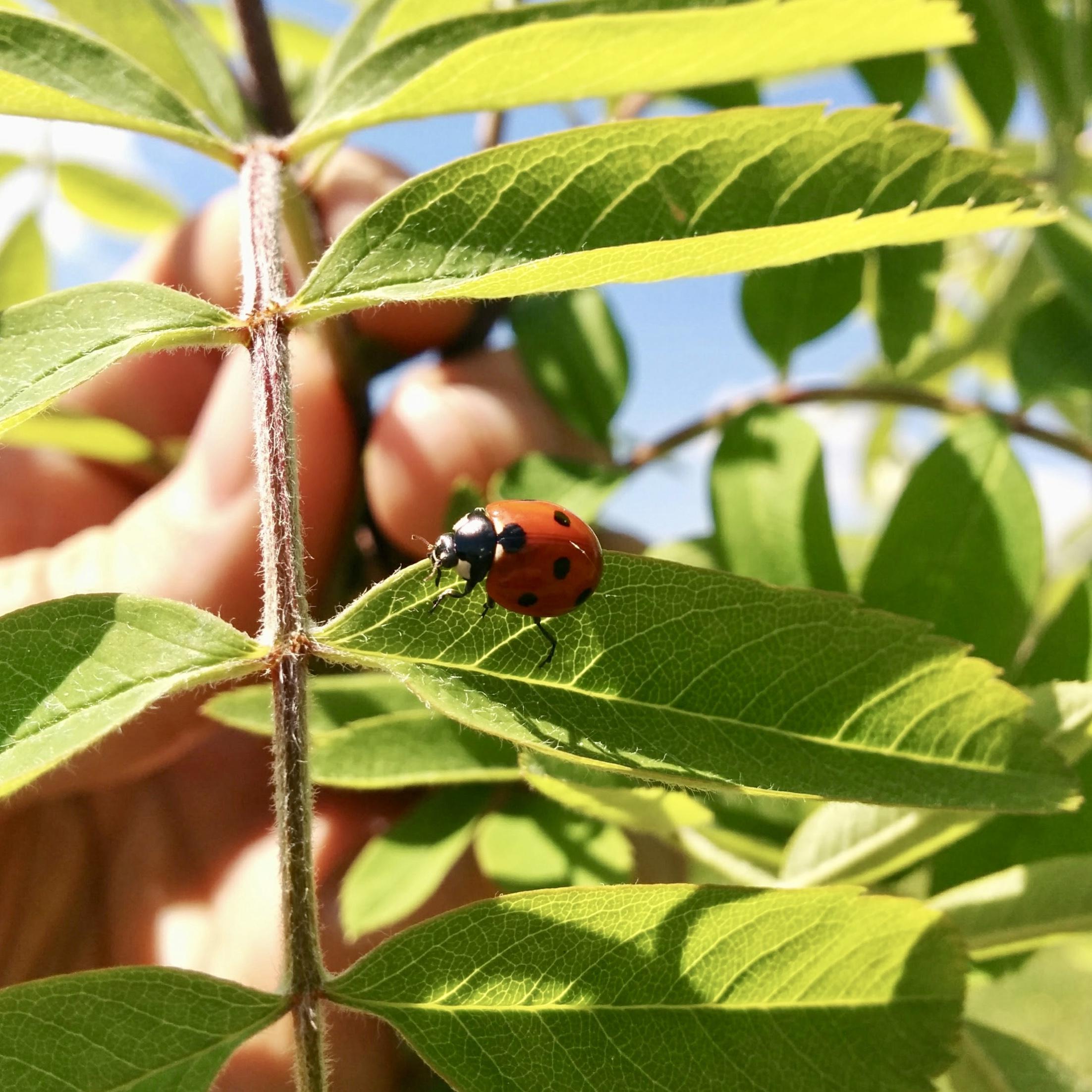 Pozoruj hmyz