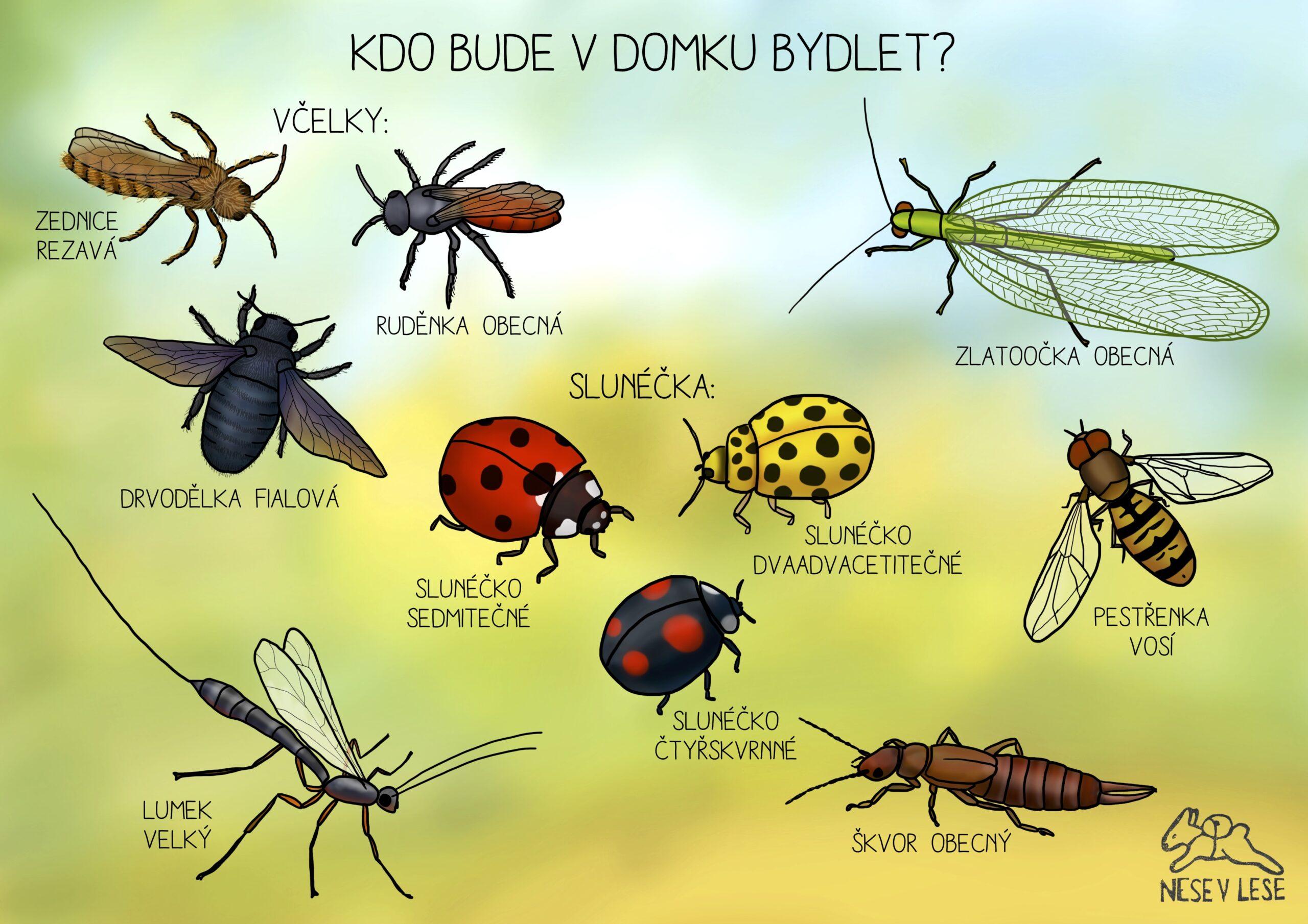 Poznej hmyz